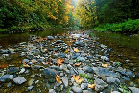 Jedediah Smith Redwoods State Park Crescent City Ca