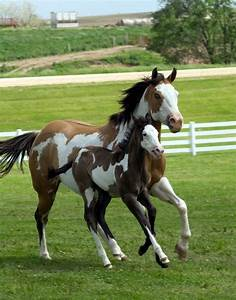 Paint horse, mare and foal. - Pixdaus