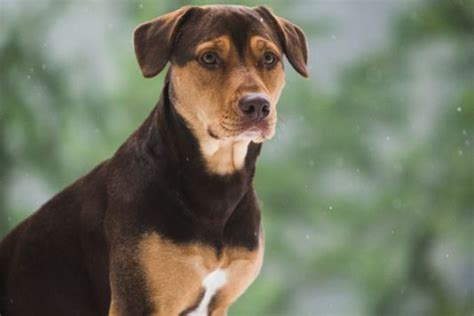 dogs  home canine stars fascinating journey