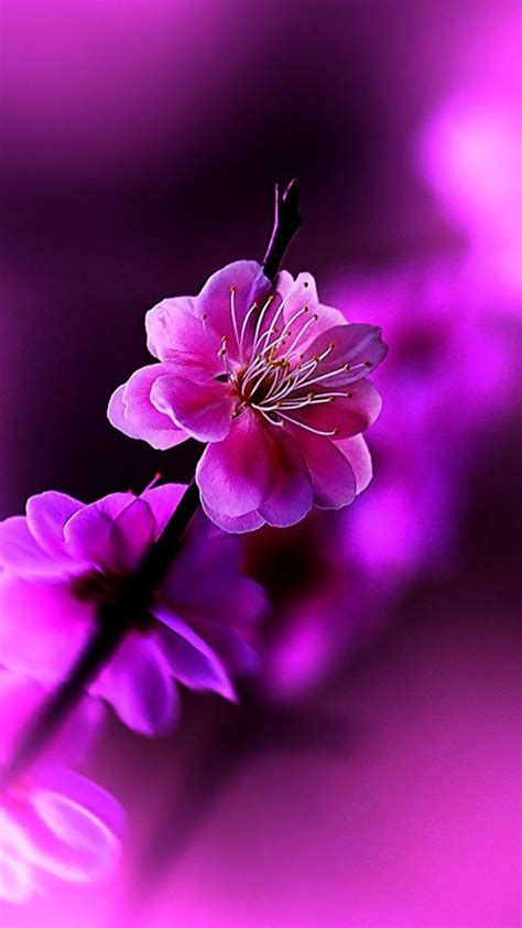 flowers violet hd wallpaper android iphone spring