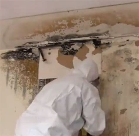 ami environmental mold removal   safely remediate mold