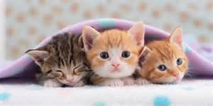 cats that stay small tiny kittens for your tiny home