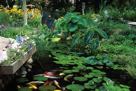 water garden plants plants for ponds and water gardens hgtv