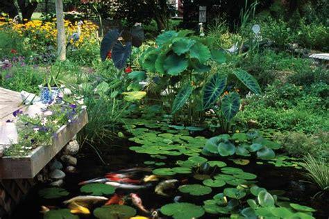 plants  ponds  water gardens hgtv