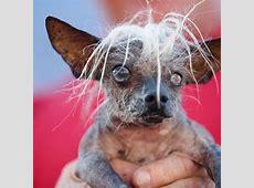 EN IMAGES Peanut, le chien le plus moche du monde L'Express