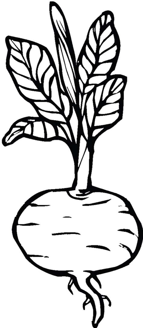 beet color beets coloring pages for beets coloring pages for
