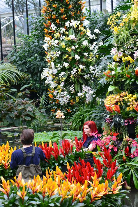 kew gardens orchid festival 2016 the garden