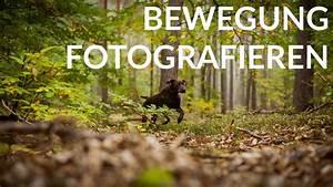Belichtungszeit Berechnen : bewegung tiere fotografieren tutorial ~ Themetempest.com Abrechnung