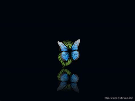 butterfly windows  wallpapers