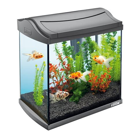 2 gallon glass awesome aquariums aquarium addicts anonymous