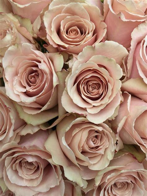 blush colored flowers best 25 blush flowers ideas on blush wedding