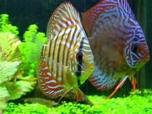 Aquarium Fische Süßwasser Liste : maxnbertha 39 s freshwater fish photo id 4282 full version ~ Watch28wear.com Haus und Dekorationen