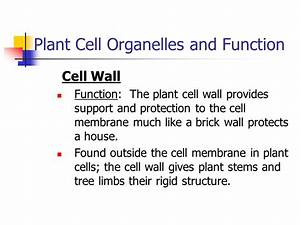 Plant And Animal Cell Organelles And Functions