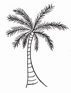 Palm Tree Drawing - Samantha Bell