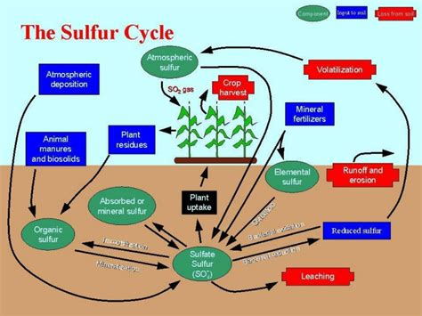 Phosphoru Cycle Diagram Pdf by Biogeochemical Cycles And Conservation Ecology 2010 Edition
