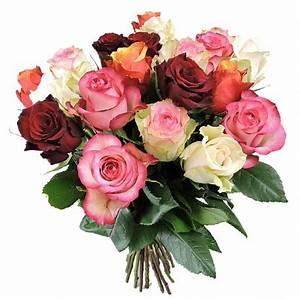 Rosen Ohne Dornen : roses rouges sans verdure ~ Lizthompson.info Haus und Dekorationen