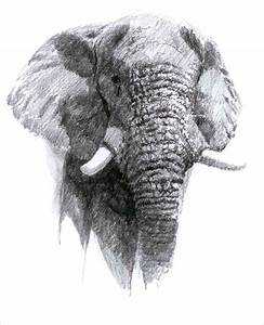 African Elephant by cosmogenesis on DeviantArt