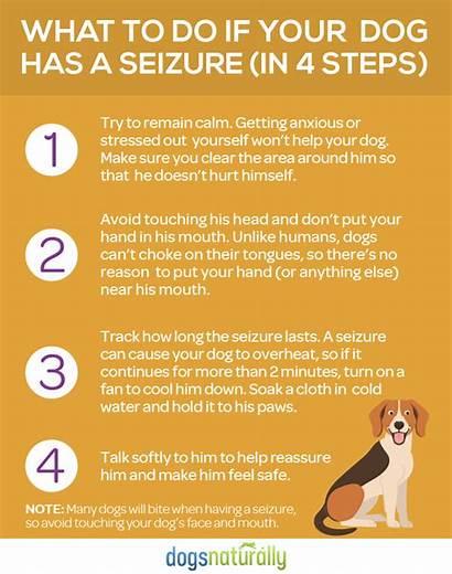Dog Seizure Seizures Epilepsy Natural Dogs Should