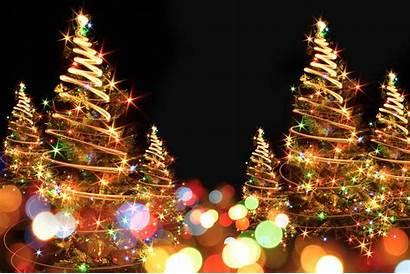 Tree Lighting Ceremony Oak Ridge