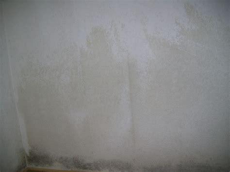 Schimmel An Den Wänden by K 252 Nigungsfrist Einhalten Bei Schimmel An Den W 228 Nden