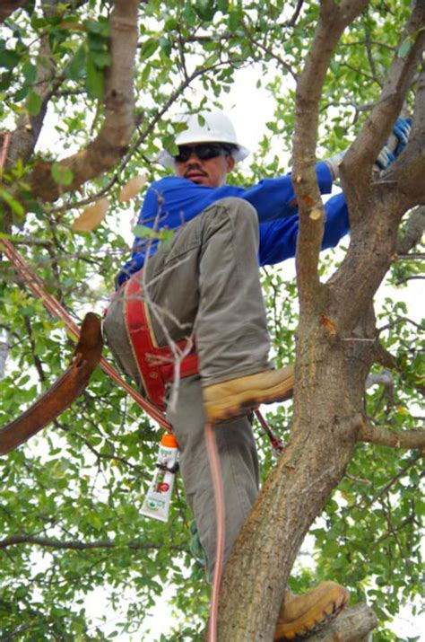 preservation tree helps educate local tree professionals