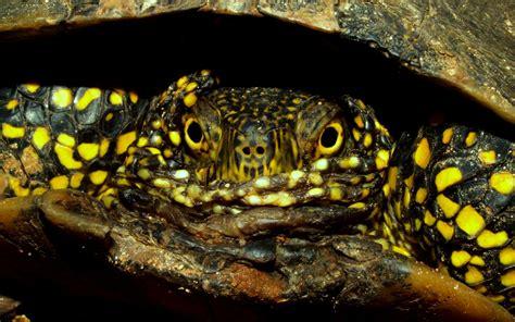 tartarughe alimentazione tartaweb il mondo delle tartarughe