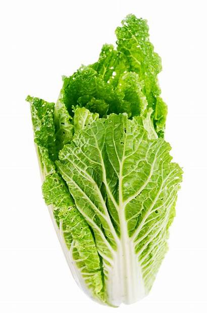 Lettuce Leaves Leaf Cabbage Living Cooking Purepng