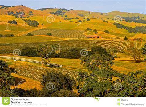 Napa Valley Vineyard At Sunset Stock Photo  Image Of