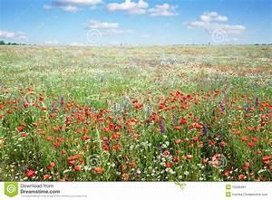 Wiese Mit Blumen : bunte blumen in der wiese stockbild bild von sommer ~ Watch28wear.com Haus und Dekorationen