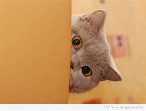 Факты о кошачьих страхах