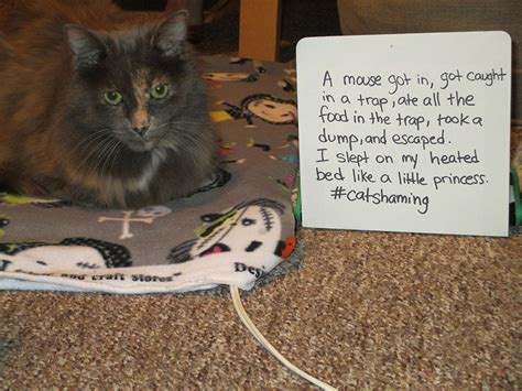 cat shaming petswelcomecom