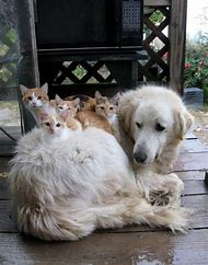 Funny Cats and Dogs Together