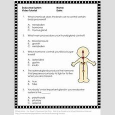This Free Printable Endocrine System Worksheet And Video Will Supplement Your Human Body Systems