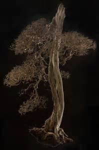 Blaukorn Baum Töten : wie man einen baum mit kupfersulfat t ten ~ Lizthompson.info Haus und Dekorationen