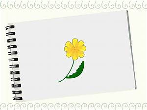 How To Draw A Dandelion | www.pixshark.com - Images ...