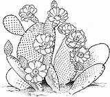 Cactus Coloring Flower Blossom Adult Drawn Printable Plants Mandala Desert Drawing Dibujos Flowering Kaktus Sunset Pflanzen Colorear Flores Ausmalen Template sketch template
