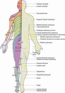 Essential Regional Anesthesia Anatomy