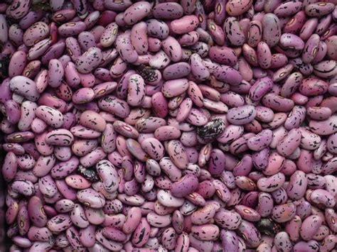 je cuisine ce que j ai dans mon frigo graines de haricots d 39 espagne