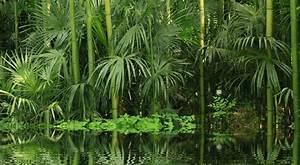 tige de bambou entretien dootdadoocom idees de With idees de terrasse exterieur 9 areca entretien arrossage et rempotage