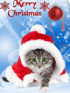 kitty merry christmas gif pictures   images