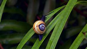 Cuba: The Accidental Eden   Full Episode   Nature   PBS