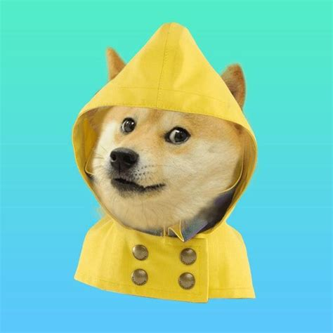 Can we make it rain dogecoin on social media? Let's find ...