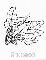 Spinach Coloring Pages Template Vegetable Wemberly Worried Sheet Designlooter Zoom Drawings 930px 23kb Print sketch template