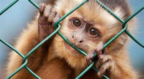 Animali In Gabbia - vivisezione animali la vita in gabbia eticamente net