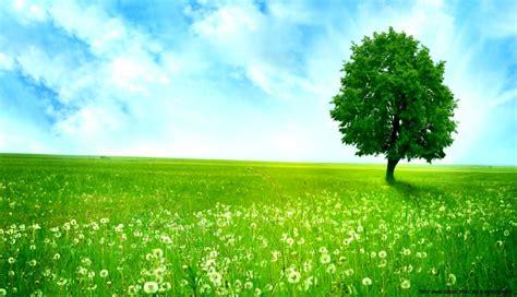 Windows Green Grass Wallpaper Hd