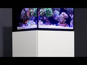Aquarium Unterschrank Bauen : diy aquarium unterschrank bauen meerwasseraquarium 05 crowncheck youtube ~ Watch28wear.com Haus und Dekorationen