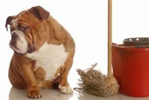 Waschmaschine Riecht Unangenehm Was Tun : urinflecken entfernen tipps bei flecken und uringeruch ~ Markanthonyermac.com Haus und Dekorationen