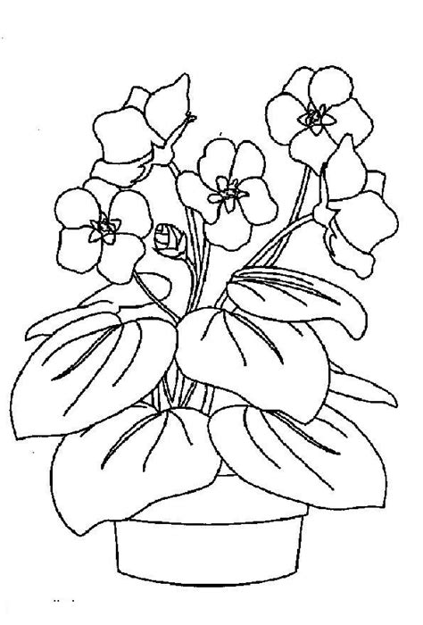 violet coloring pages    print