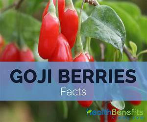 Goji berries, Wolfberry Facts and Nutritional value