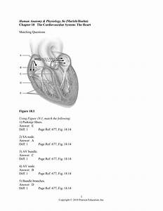 Marieb Anatomy And Physiology Test Questions
